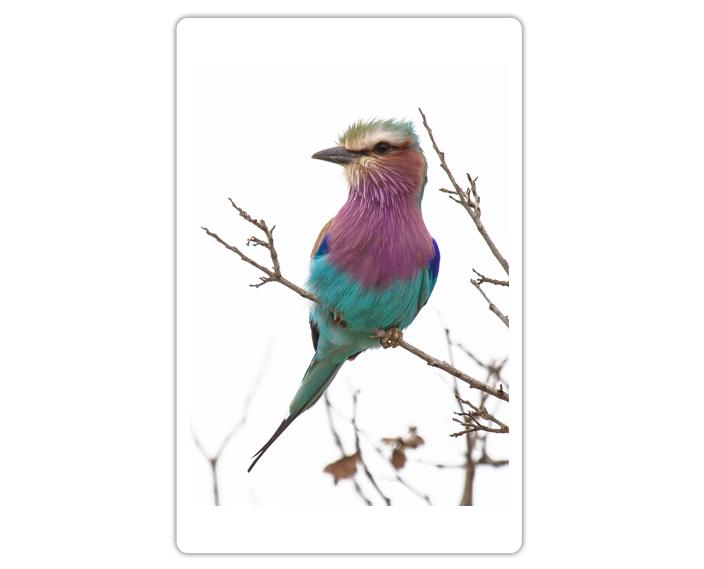 Photo Portfolio - Birds