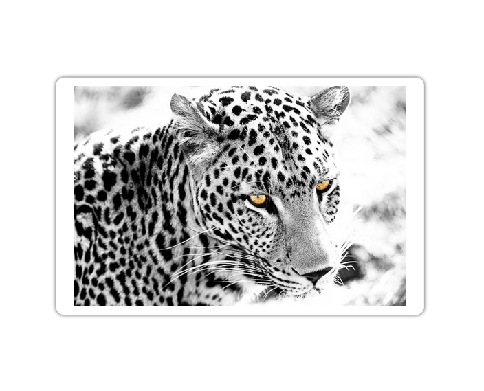 Photo Portfolio - Wildlife